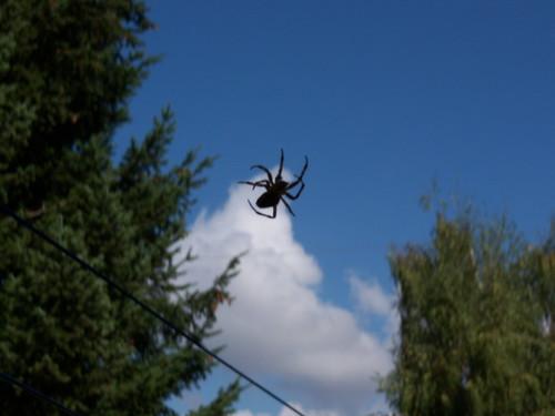 sky spider