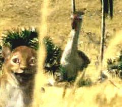 01 smilodon cub and terror bird