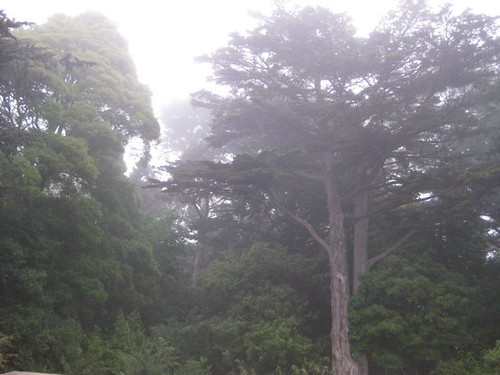 fog_062210