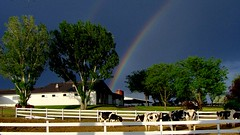 rainbows in the heartland (spysgrandson) Tags: sky barn rainbow cows farm sony idaho dairy sonycybershot holsteins dairyfarm 0610 pastoralscene spysgrandson