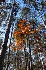 the only fall color we got to see (Primus D'Mello) Tags: park fall canon state north kettle moraine primus dmello primusdmello