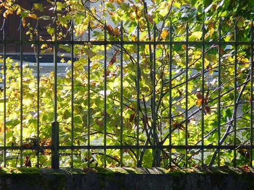 Iron Fence, Feldbrunnen