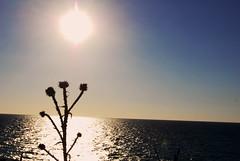 dry horizon (MiladyF) Tags: sunset tramonto horizon kos greece controluce cardo orizzonte