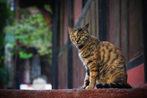 Oct 20. Cat in a Taoist temple