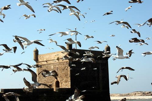 Essaouirra