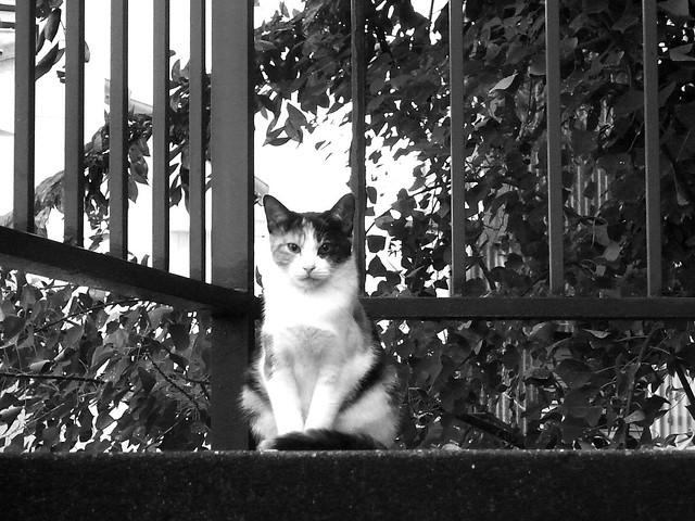 Today's Cat@2010-11-01