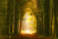 Enter Mystara ( Damona-Art ..`..`) Tags: wood morning autumn trees light sun sunlight fall nature colors leaves souls playground forest photoshop lost photography landscapes lightandshadows woods nikon raw seasons belgium belgique secret magic herbst dream natura fantasy dreams mystical tervuren paths magical forests hdr mystic enchanted sunbeams d300 photomatix bookofsecrets damona naturewatcher thesecretlifeoftrees zauberwelt