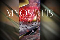 EXPOSITION MYOSOTIS (GhettoFarceur) Tags: fan exhibition exposition graff gf paume paum rodez pmb myosotis fpc lcf sarin rems superpaum debza