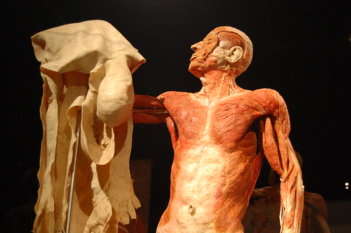 Body Worlds likewise Historyartb blogspot furthermore 2142431754488305703 furthermore S Exposition 769611 additionally Bodiesthe Exhibition Titanic The Experience Debut In Buena Park California Giveaway. on bodies exhibit circulatory system