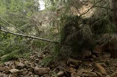 Banks-Vernonia landslide