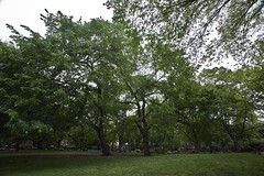 -- (felix.castor) Tags: park nyc green spring may overcast ev tuesday tsp 051110 tompkinssq sometrees nycsky