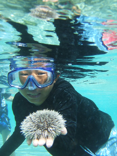 Rocky finds a nice sea urchin!