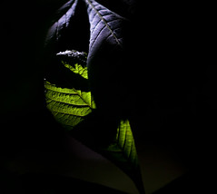 Woodland light (Steve-h) Tags: trees ireland dublin nature leaves chestnut blueribbonwinner steveh mywinners flickraward canoneos500d platinumheartaward flickrestrellas phvalue artofimages saariysqualitypictures bestcapturesaoi oracope canonef70200mmf28lisiiusm