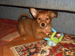 Hunde - 58 (Manfred Lentz) Tags: pets dogs puppy pups puppies hunde littledogs welpen hndchen babydogs whelps