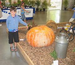 pulguito pumpkin