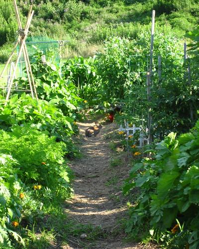 garden #3134: predatorial!