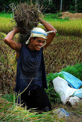 Philippines,Pinoy,Life,rural Magdalena, Laguna young man farming rice harvest treshing