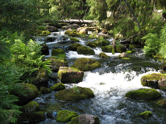 Brook in Fulufjällets Nationalpark