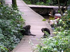 P9094547 (tsaiid) Tags: monkey hiking taiwan kaohsiung            2007090903tsaiid