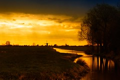Gold Dutch landscape (drbob97) Tags: light sky holland tree windmill dutch its yellow clouds landscape gold one with small nederland geel naturally goud thegalaxy utch oltusfotos saariysqualitypictures bealivebetopbeseven mygearandmepremium mygearandmebronze mygearandmesilver mygearandmegold mygearandmeplatinum mygearandmediamond mygearandmeplatinium dblringexcellence