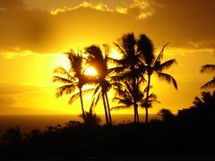 Maui Banyan H-314 Sun Set