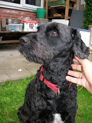 DSCN0123 (Amigrante Nnimo) Tags: dog chien cane fur hond tommy perro hund pelo badbreath peludo elmejoramigodelhombre malaliento muchopelo elmejoramigodestehombre