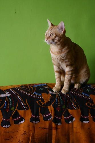 Felix on the Indian tissu