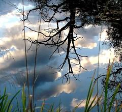 Evening reflections (tina negus) Tags: winter water reflections evening lincolnshire naturesfinest wowiekazowie ishflickr beltonpark