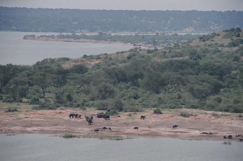 Uganda - QENP Elephants Remote 3