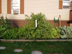 Garden July 10