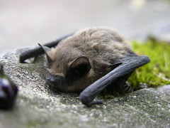 Bat on a sidewalk
