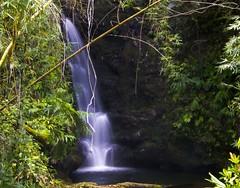 Bamboo And Falls