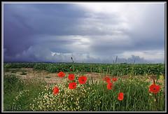 Guînes: les champs (│JL│) Tags: light red cloud france fleur field landscape rouge nikon d70 horizon thunderstorm paysage orage champ coquelicot guines