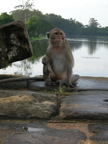 Temple monkey with frog