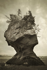 The Face of Nature (IrenaS) Tags: ocean sea blackandwhite canada nature sepia landscape bravo surreal newbrunswick bayoffundy oceanfloor hopewellrocks flickrsbest artlibre