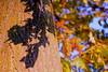 come foglie... (Farfal's (Offissima)) Tags: foglie tramonto lucca ombre mura autunno canoneos550d