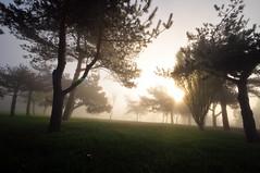 Gün yükselmeden / Before rise (Atakan Eser) Tags: mist tree misty fog scene istanbul sis sisli manzara ağaç çamlıca dsc7457