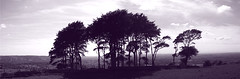 Cleeve Hill Tree View 2