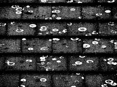 Just black (Baba Mdogo) Tags: roof black pattern tiles fungus utata:project=justblack