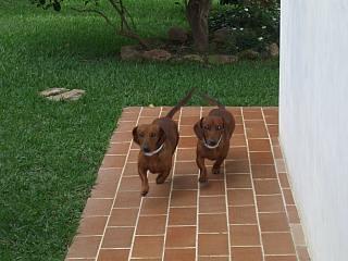 Lalo e Lui