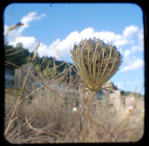August 17, 2007 (Thistle)