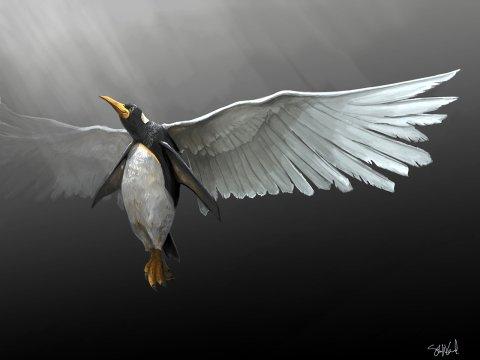 Ascending Penguin