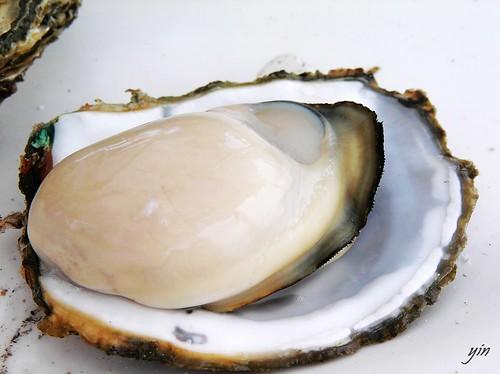 澎湖Penghu-新鮮現烤蛤蠣,超肥美