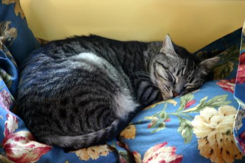 Arnold Cat