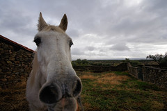 Good morning (Eduardo Estllez) Tags: old espaa horse nature photoshop photography photo spain foto photographer scene fotografia dslr goodmorning middleages abandonment granadilla fotografo extremadura caceres approximation vetonia eduardocagney eduardoestellez estellez