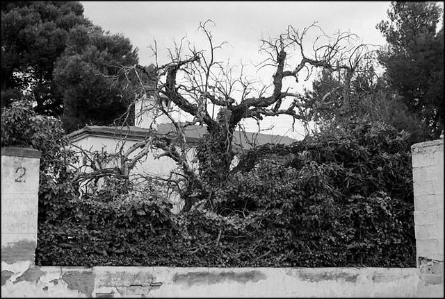 Naturaleza Muerta (Bétera 2010)