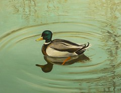P1080185  This is my Oil Painting (petersuksin_chan) Tags: world canada bird animal duck artist little montreal exhibition oil paiting ishkolorkraft