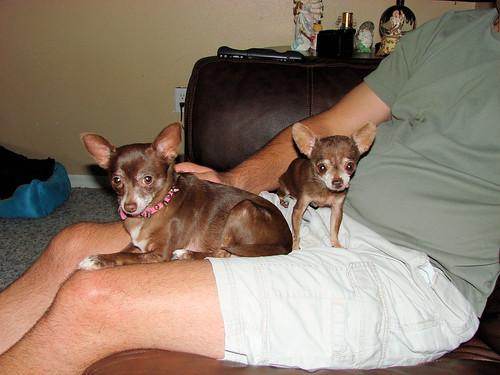 Tiny Dog and Tinier Dog