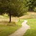 Path on the Farm