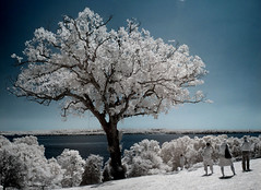 tree view (zachstern) Tags: trees wallpaper tree nature river landscape ir arbol view tr boom rbol infrared  georgewashington albero tre puu arbre rvore potomacriver strom baum mountvernon trd  infravermelho r72 copac infrarot   naturesfinest drzewo   stablo infrarrojos   treeview infrapuna infrarood infrarouge  infrarossi   f717ir  thatsclassy inframerah     infravrs infraerven